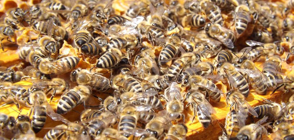 Brakuje pszczół ipszczelarzy!
