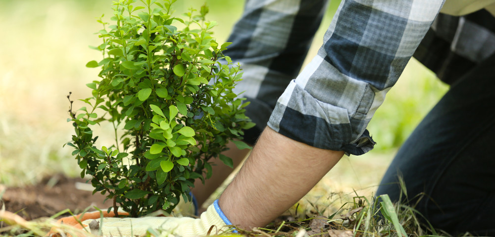 Zalesienie, bioasekuracja: do kiedy przyjmowano wnioski?