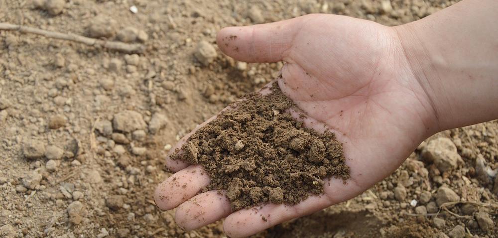 Badanie gleby – próbki najlepiej pobierać po żniwach