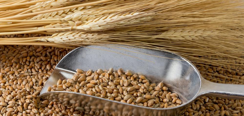 Ceny zbóż na rynku. Poświąteczny tydzień rozpoczął się od spadków