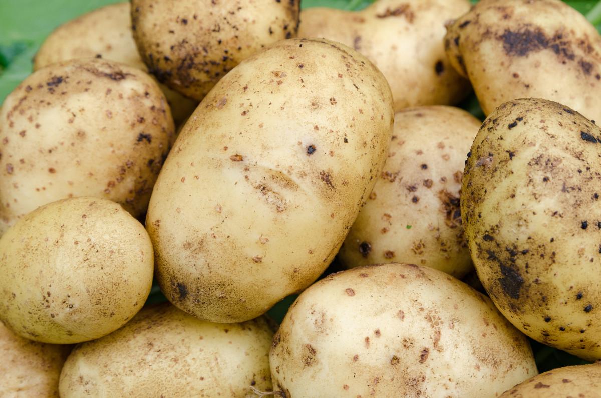 desykacja ziemniaka