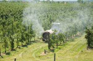 przygotowanie drzew owocowych