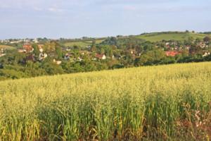 stanowisko pszenica ozima