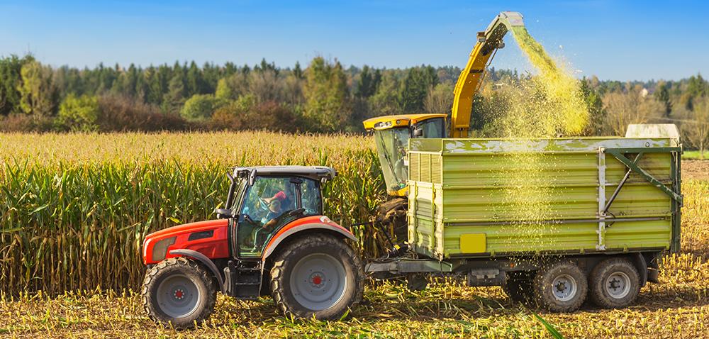 Żniwa kukurydzy na kiszonki idą pełną parą!