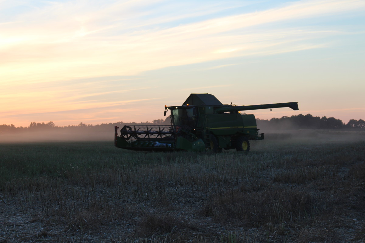 Ziarna zmetką Top Farms Nasiona