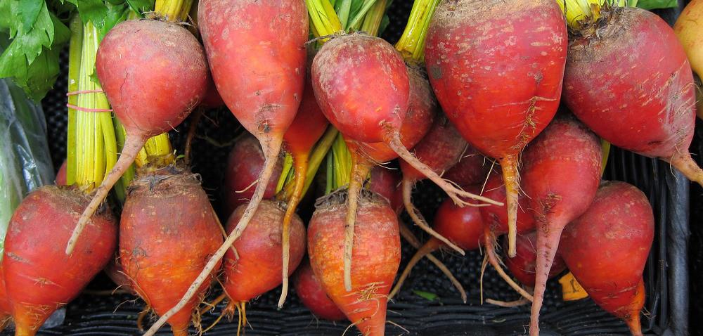 Nicienie: duże zagrożenie dla warzyw korzeniowych