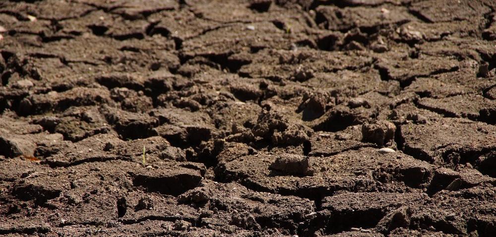 Susza utrudnia rolnikom siew, aroślinom wschody