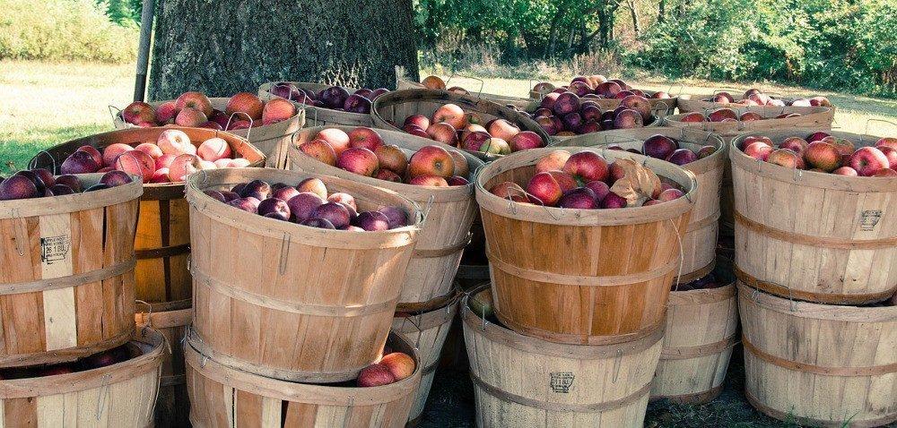 Choroby przechowalnicze: jak ochronić jabłka?