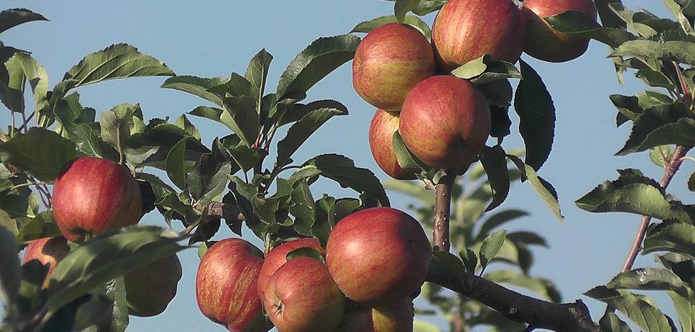 Wnioski owsparcie za wycofanie owoców iwarzyw od 30 września!