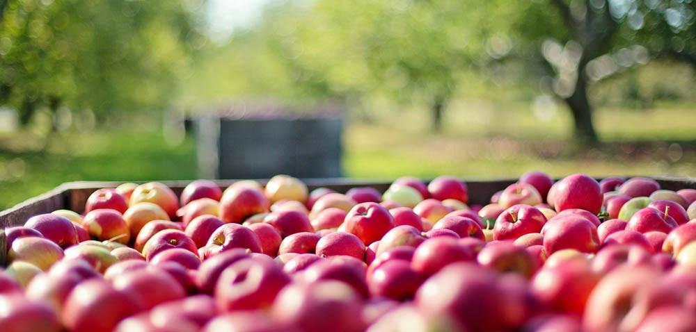 Ceny jabłek: dlaczego jest tak tanio?