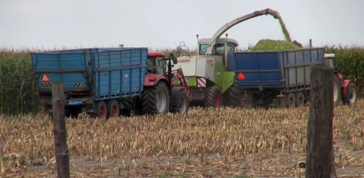 dzień kukurydzy imleka