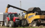 Kukurydza na ziarno: ile kosztuje wynajęcie kombajnu?