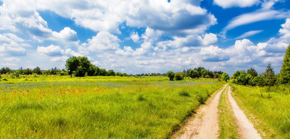 Gleby torfowe pod ochroną: renowacja łąk ipastwisk