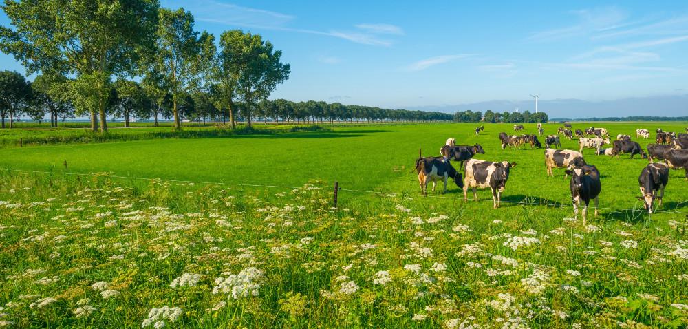 Renowacja łąk przez pełną uprawę płużną