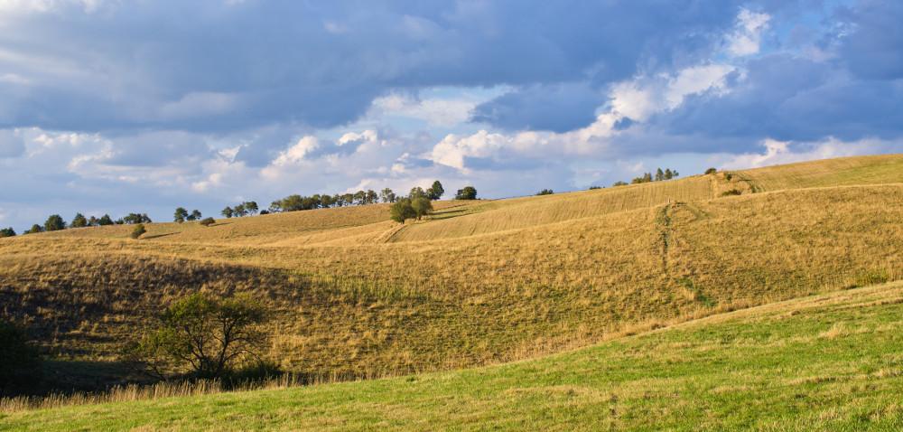 Użytki zielone: czy warto siać trawy jesienią?