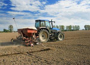 nasiona kwalifikowane / Kujawsko-pomorskie: deszcz uratowały rośliny