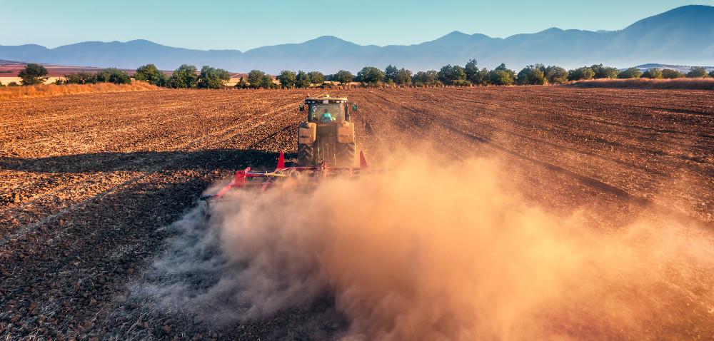 Pszenica ozima: uprawa gleby przed siewem
