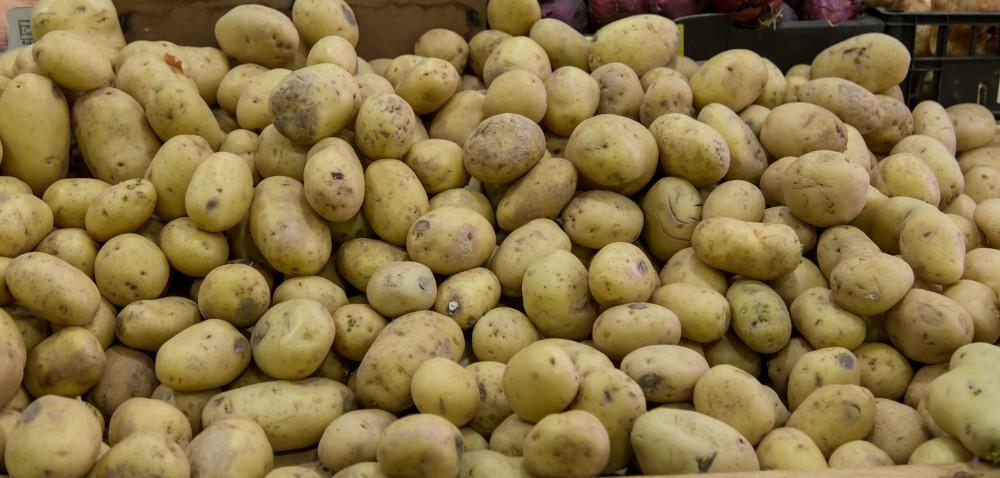 Susza azbiory ziemniaków