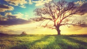 Ustawa osprzedaży ziemi: chronimy ziemię tak jak inni!