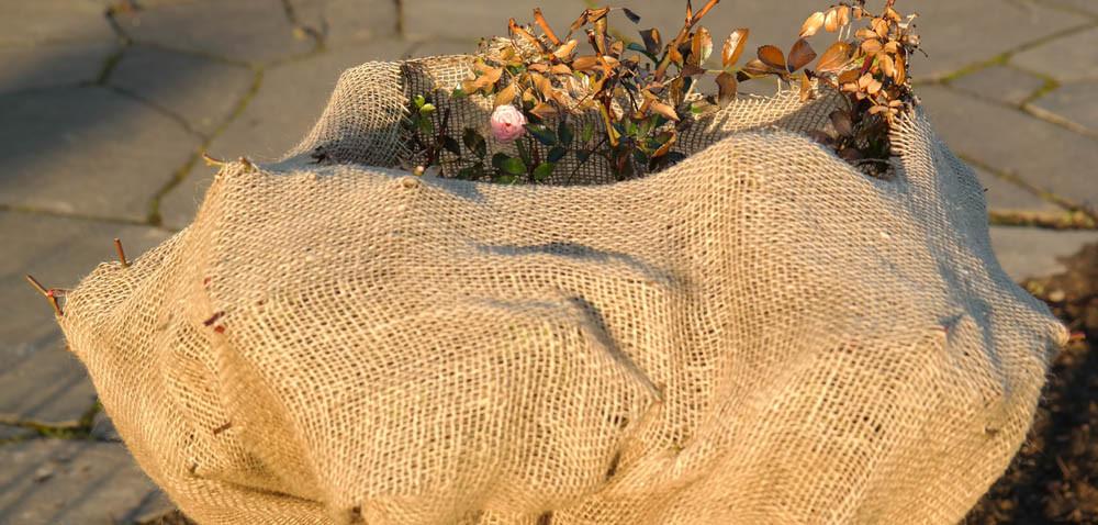 Okrywanie roślin: jaki materiał użyć?