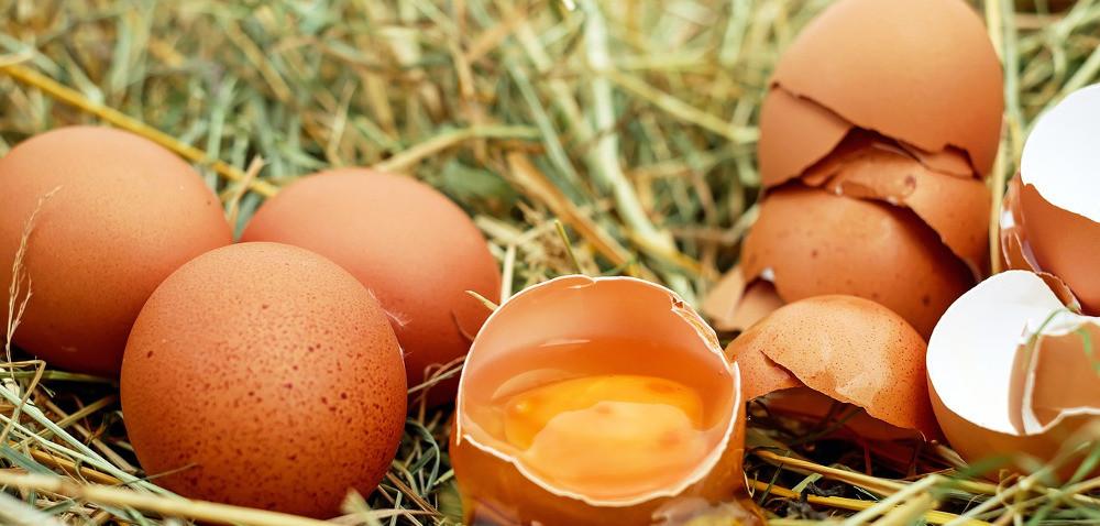 Salmonella wpolskich jajach wEuropie. Czy krajowy konsument jest bezpieczny?