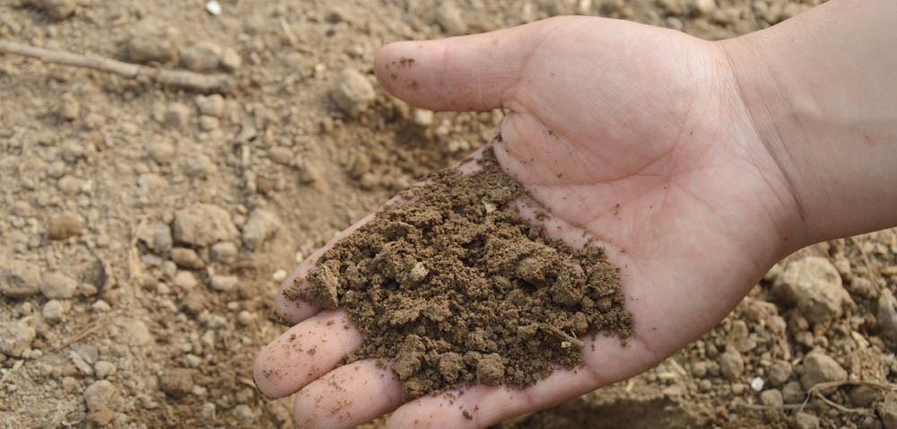 Jakie pierwiastki warto zbadać wanalizie gleby?