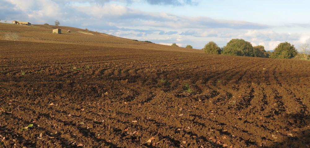 Kiedy zbadać glebę?