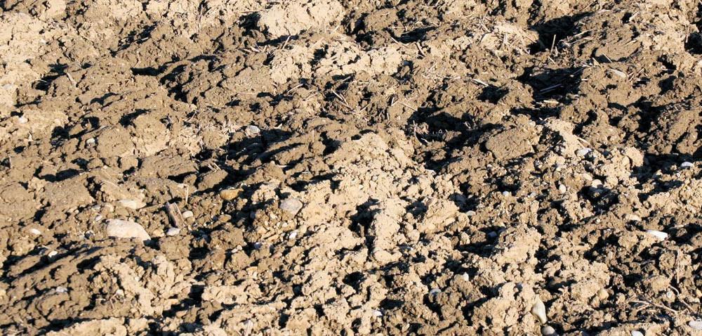 Jak pobierać próbki gleby do badania?