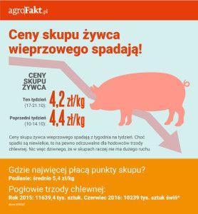 ceny żywca