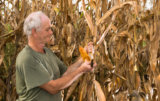 kukurydzy