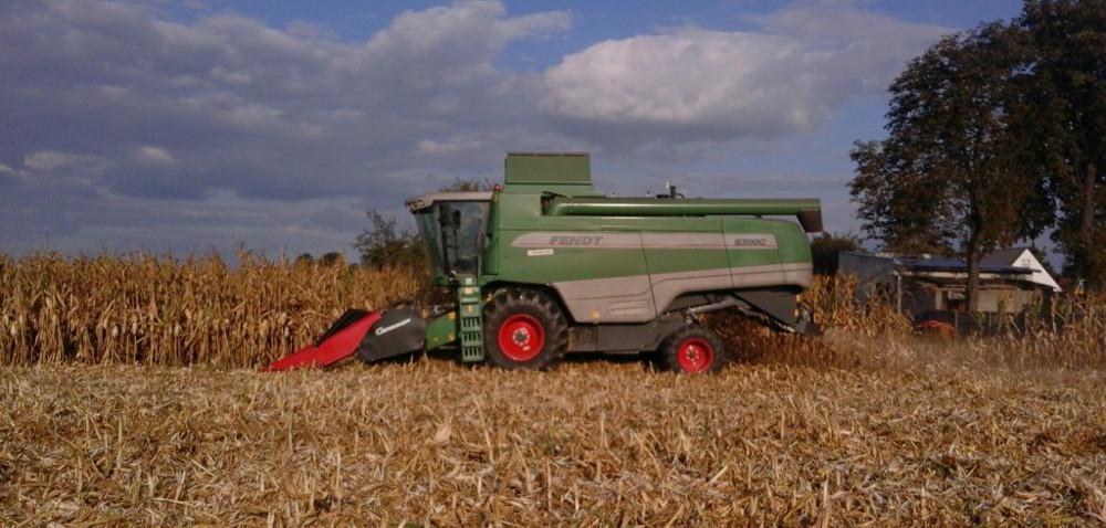 Podlasie: kukurydza na ziarno – żniwa wpełni