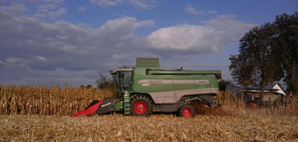 Deszcz spowalnia zbiory kukurydzy
