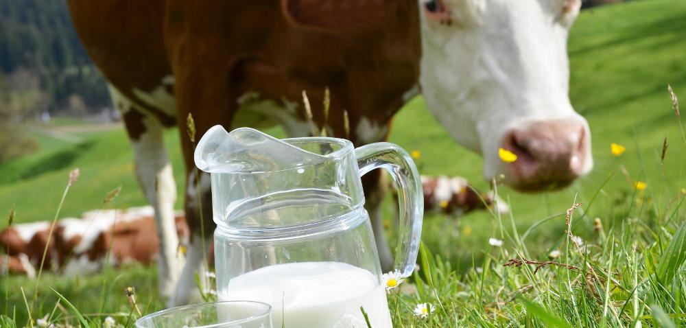 OSM Piątnica wprowadziła produkty bez GMO