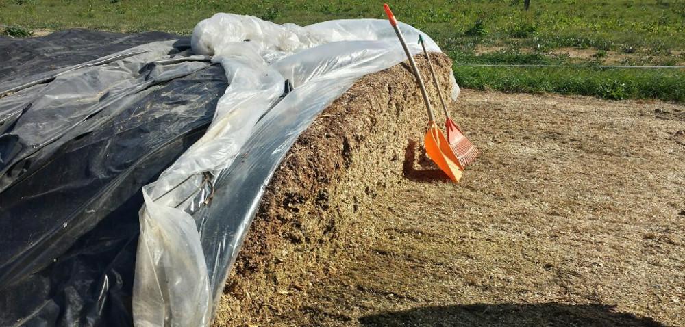 Jak pobierać kiszonkę zpryzmy kukurydzy?