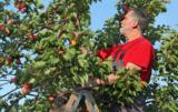 uokik jabłka