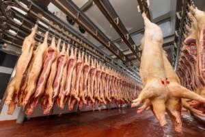 pomoc dla producentów mięsa