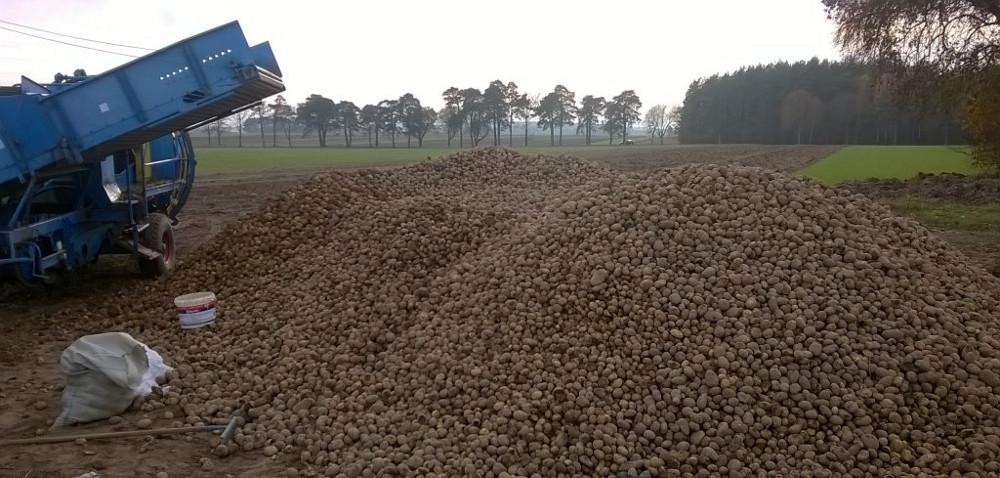 Mokra zgnilizna bulw ziemniaka