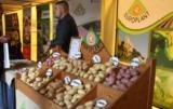 forum ziemniaczane rynek ziemniaka