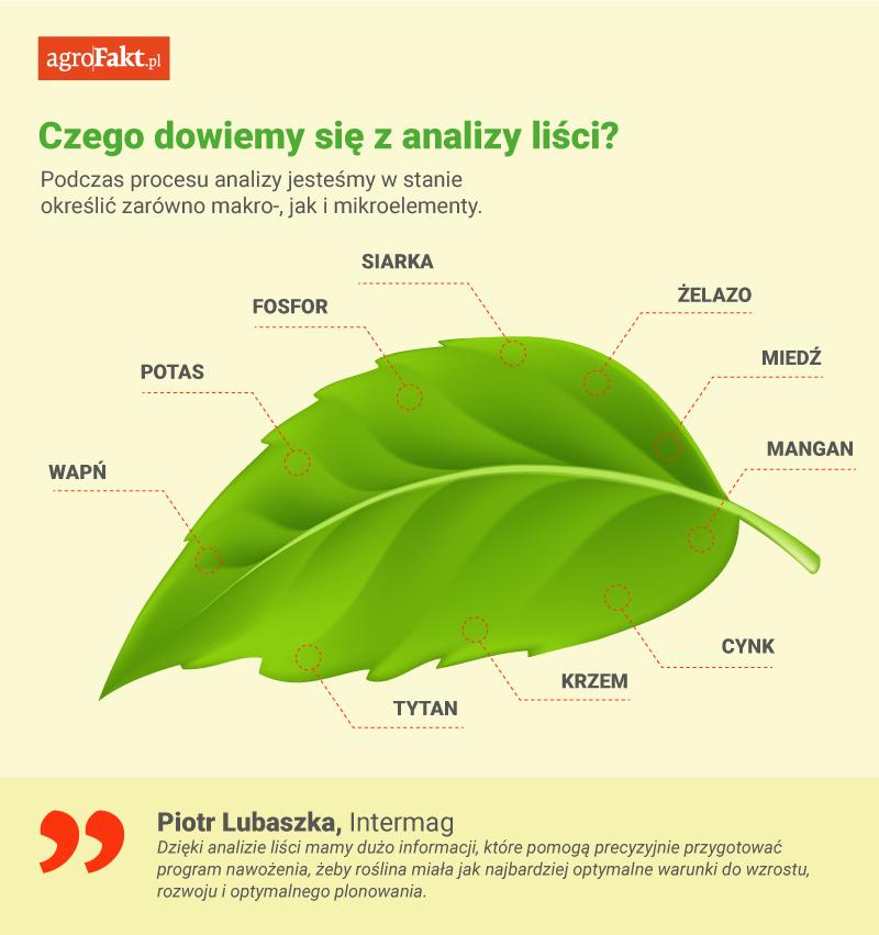 analiza liści