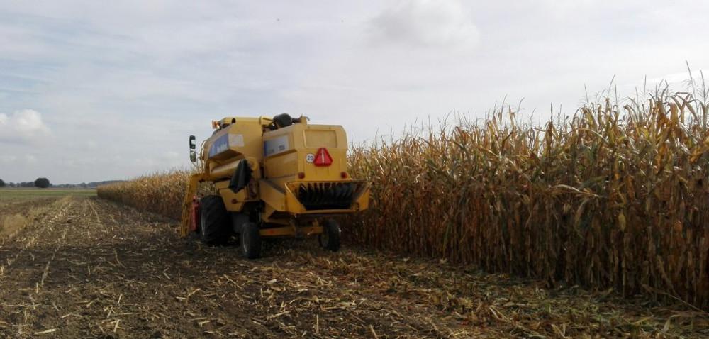 Rozdrabnianie resztek po kukurydzy przed orką
