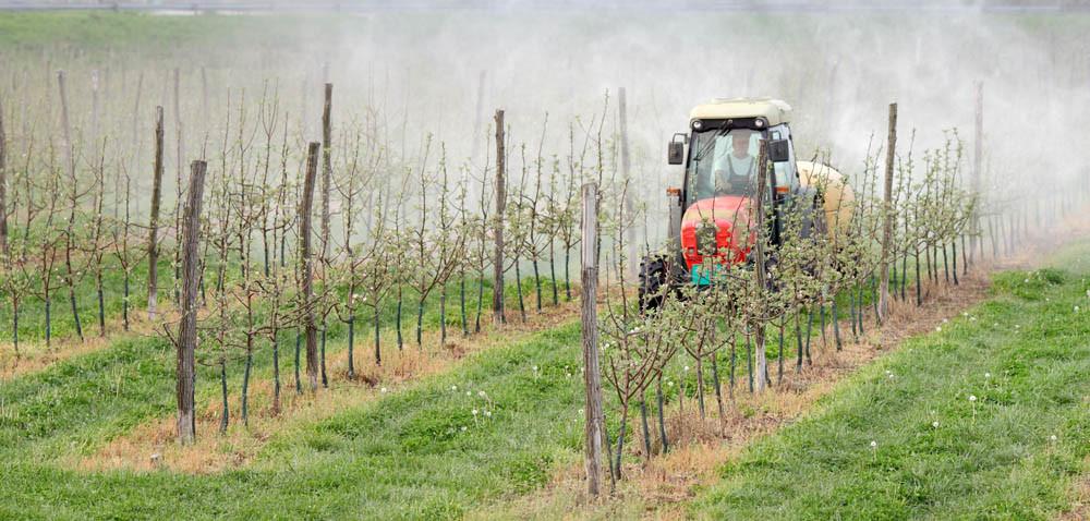 Jak jesienią zwalczać parcha jabłoni?