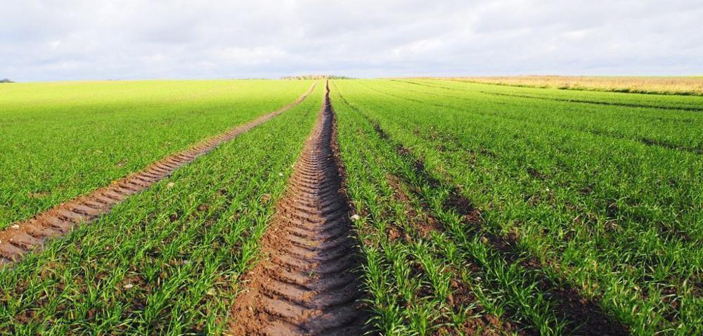 Przekuć na sukces kaprysy pogody: nawożenie zbóż ozimych!