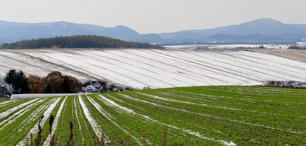 Jakie zimy są lepsze dla szkodników: zimne czy ciepłe?