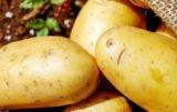 forum ziemniaczane / problem ziemniaka