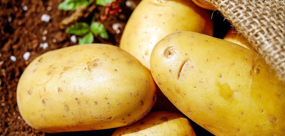 II Forum Ziemniaczane: oprzyszłości polskiego ziemniaka