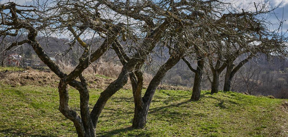 Czym dokarmić drzewa jesienią?
