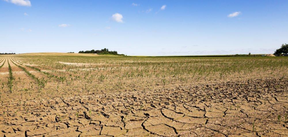 Pomoc dla rolników dotkniętych klęską – nabór wniosków tylko do jutra! [AKTUALNOŚCI]