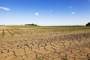 Ubezpieczenie upraw rolnych