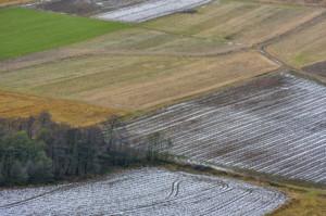 ubezpieczenia upraw rolnych