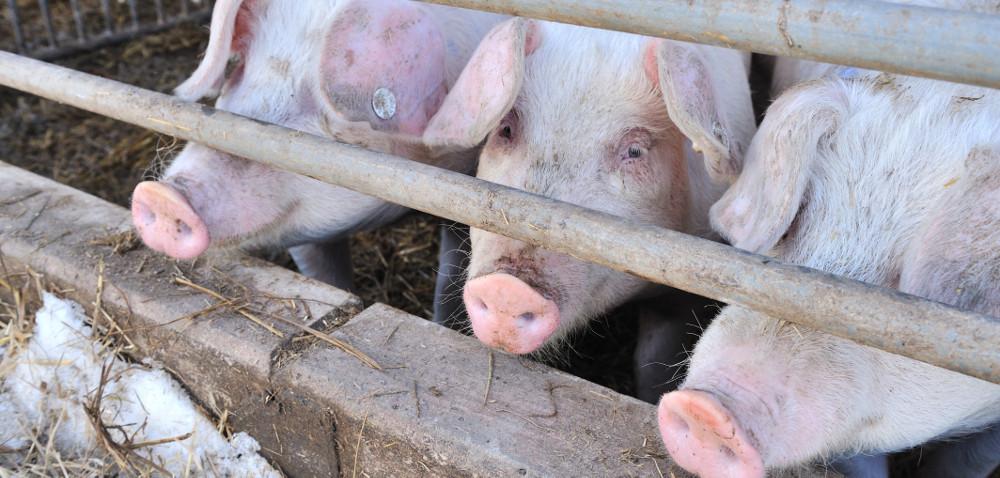 Zasady bioasekuracji wpraktyce – kontrole ruszają!